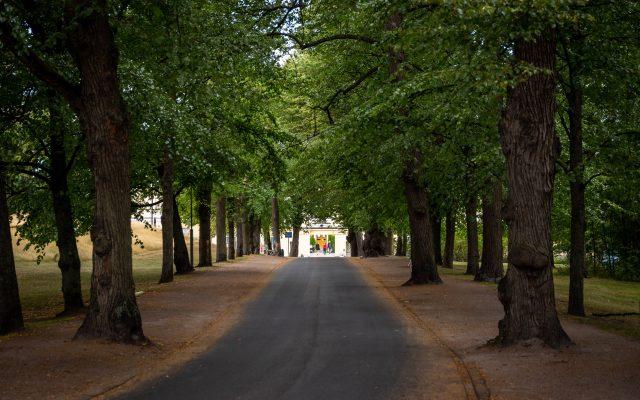 Ajoväylä portille - puut